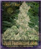 Mandala Seeds Far Out Feminised Cannabis Strain for sale